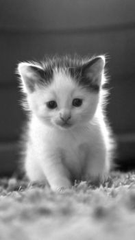 Small Kitten by AneurysmGuy