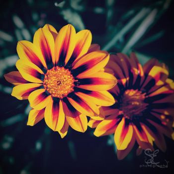 .yellow smile. by multicolorlips