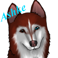 Ashke The Siberian Husky by EumyCookie