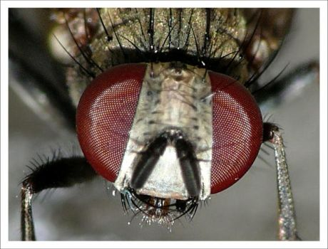 Face to Face - Fly Macro by Mar1lyn84