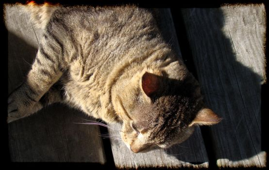 Spaz Laying in The Sun by rockfrogger