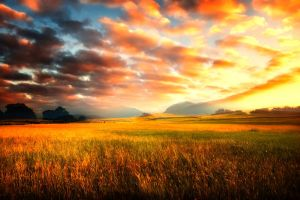 Premade Background Nature Stock 102 by Jassy2012