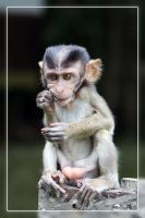 Tough Little Monkey by aajohan