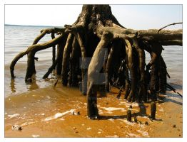 Tiptoeing Tree - roots by Elorine