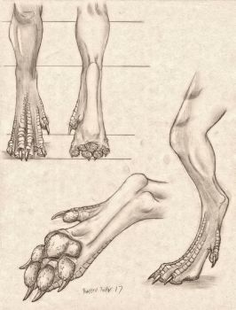 Pawed Dragon Leg/Foot Anatomy Study by RussellTuller