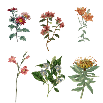 Variety of 1800's Flowers PNG by chaseandlinda