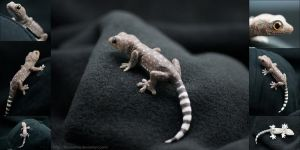 Baby Tokay Gecko Pin by IllusionTree