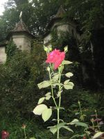 The rose near Sleeping Beauty's Castle in Efteling by Eszies-Eszie