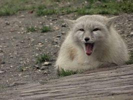 And the Gremlin Yawned by Mouselemur