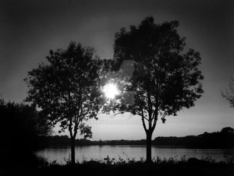 Twin Trees BW by AriPlanet