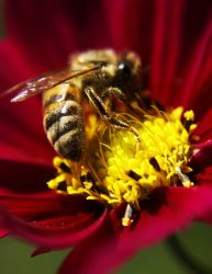 bee by bupolat