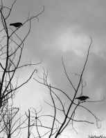 The Crows by YuliaAnnaAlexz