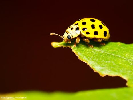 Yellow cutie by photogrifos