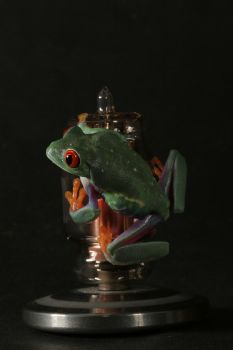 froggy on the X-ray bulb by bugalirious-STOCK