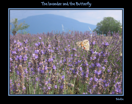The Lavander and the Butterfly by benelie