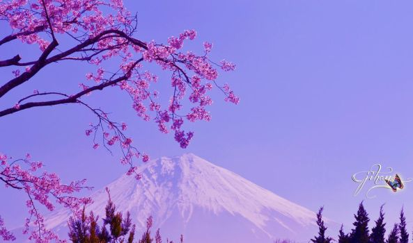 Cherry Blossom and Mt. Fuji Wallpaper by Sakura060277