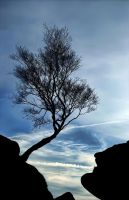 Lonely Tree by Bootcoot