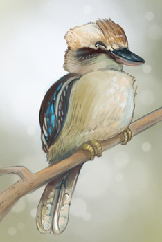 Laughing Kookaburra by Speedyrulez
