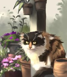 Cat by WindHydra