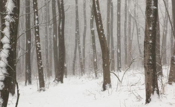 Snow by Initio
