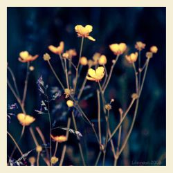 Flowers.Yellow. by Lileinaya