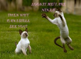 LOL Cat: Ninja by 6SeaCat9