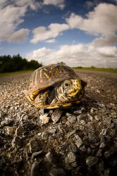 A Turtle's View by kylewright