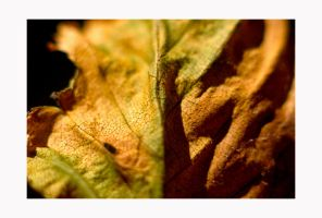 study of fallen leaves.IV by amazingPhotoboy