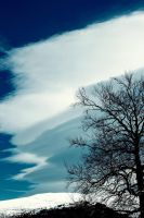 Clouds grow on Tree by NadoluBogdan