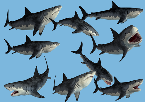 9 Monster Shark Stock PNG's by Roy3D