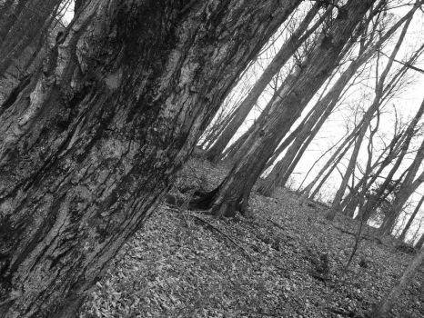 Forest Black and White Stock by Macabre-Rose-Petals