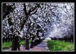 For the Love of Spring by TeaPhotography