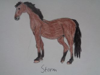 Storm by woodywoodwood