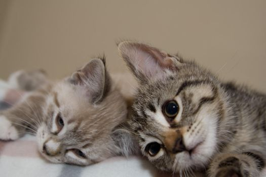 Kittens With Camera Phones by SweetpeaNat