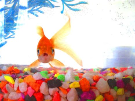 Othello The Fish by Found-Missing-89