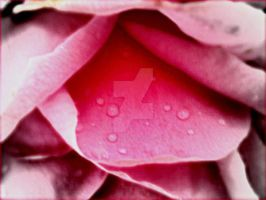 petal tears by artemissere