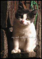 481 by evy-and-cats