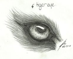 cat or tiger - eye study by wolfspirit395