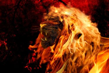 Fire lion by TomGonets
