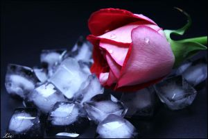 Ice Rose by LikaTheSheep