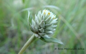 Macro Native Plant by BreeSpawn