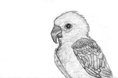 Parrot by Euv
