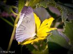 Butterfly. by Drfayed