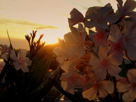 flowers in sunset by Danyok