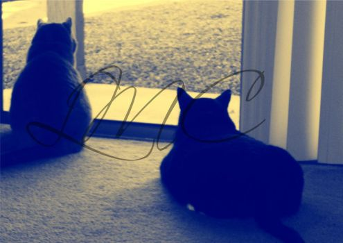 Two Cats at the Window by moonpoetry