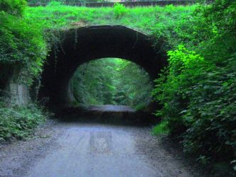 Tunnel Through Forest by wolfwings1