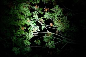 Green Leaves at Night by richardxthripp