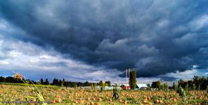 Storm of the Pumpkins by FurBabyPhotography
