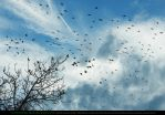 Ps Brushes: Flocks of Birds by Esmeralda-stock