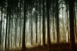 Forest by RobinRoels
